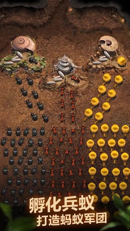 蚂蚁:地下王国游戏截图